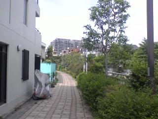 神田川・東中野