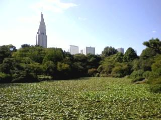 新宿御苑、秋。