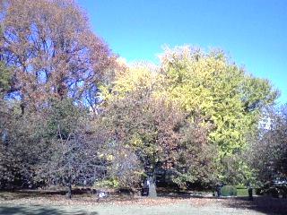 新宿御苑の紅葉は、