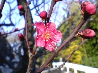 黒川にも春が来る