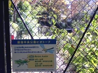 新宿中央公園ビオトープ