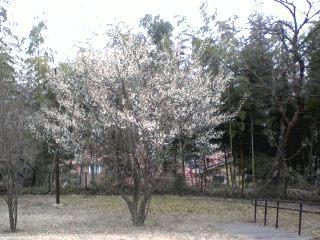はるひ野に春がやって来る