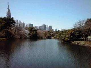 新宿御苑の桜