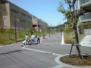 桜並木のツリーサークル