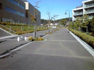 はるひ野桜並木 花壇の植え替え作業