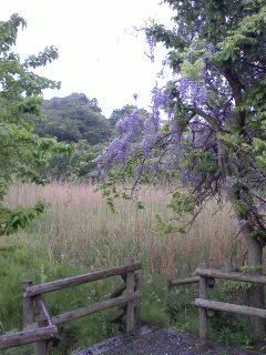 雨の黒川谷ツ公園